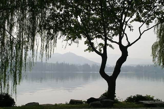 image of ginko by lakeside against misty mountains